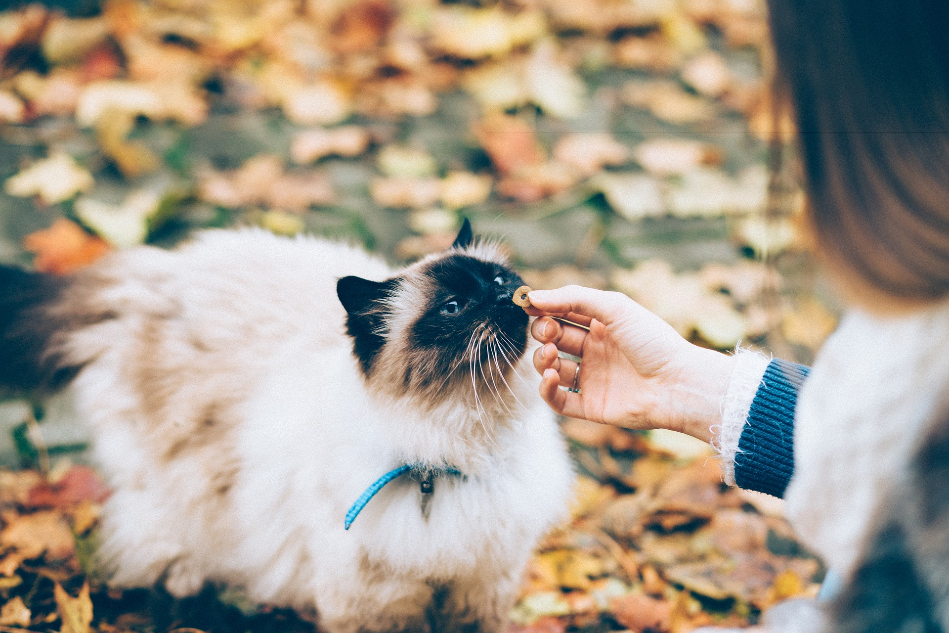 Dry Cat Food and FLUTD: Dry Food Gave My Cat a UTI