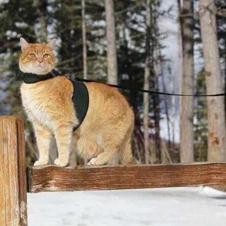 Petoodles Cat Harness