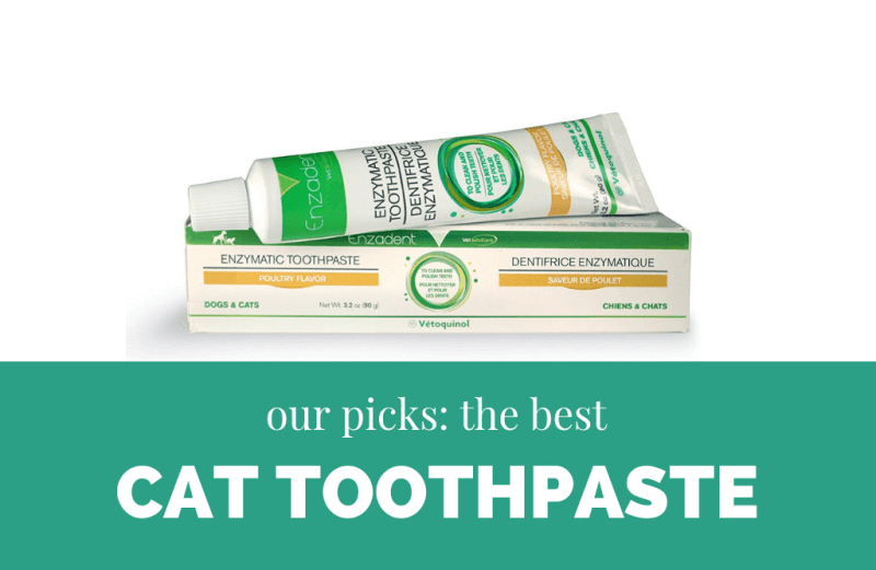 best cat toothpaste