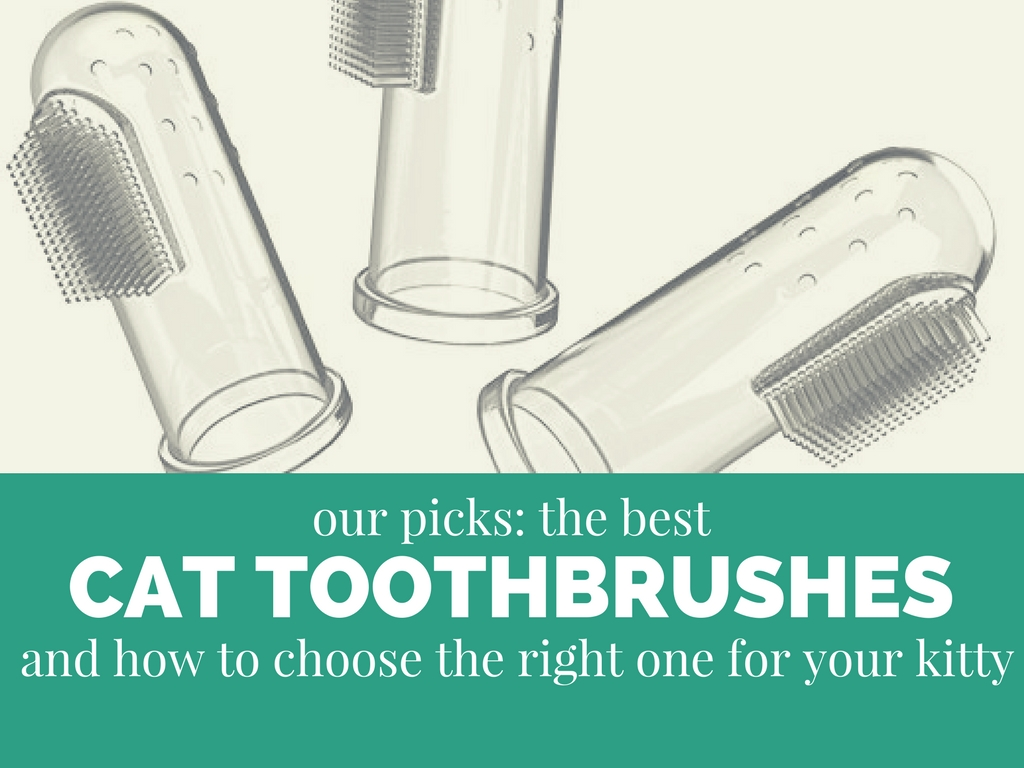 best cat toothbrush