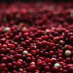 Cranberry for Cat Urinary Tract Infection Home Remedy