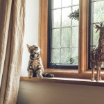 Guest Post: Tips for Keeping a Cat-Friendly Home Clean and Odor-Free