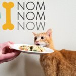 NomNomNow Cat Food Review: We Tried NomNomNow Fresh Cat Food Delivery