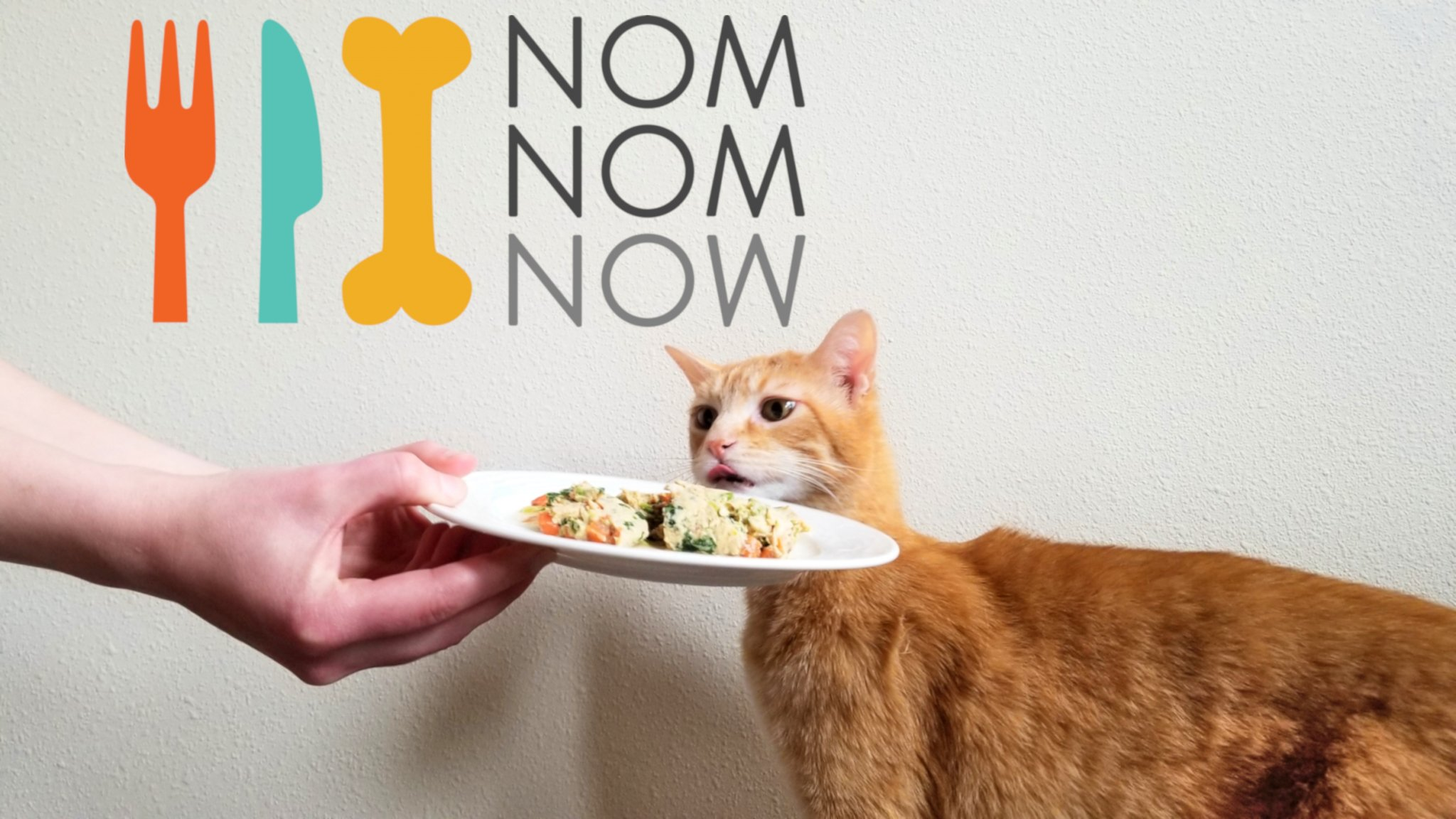 Nom Nom Cat Food Review: We Tried Nom Nom Fresh Cat Food Delivery