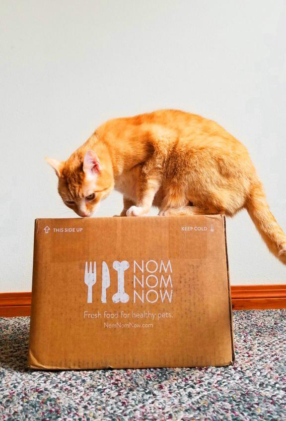 NomNomNow cat food box