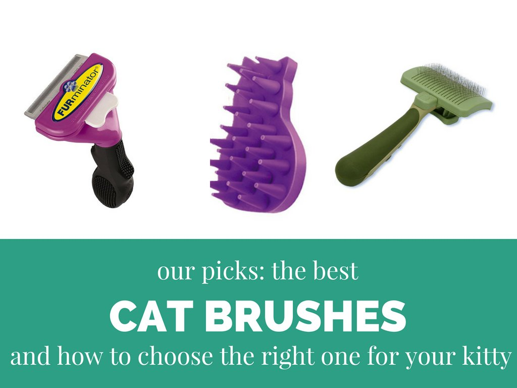 Best Cat Brushes