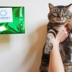 Affordable Pet Test Review: We Tried a Pet Intolerance Test