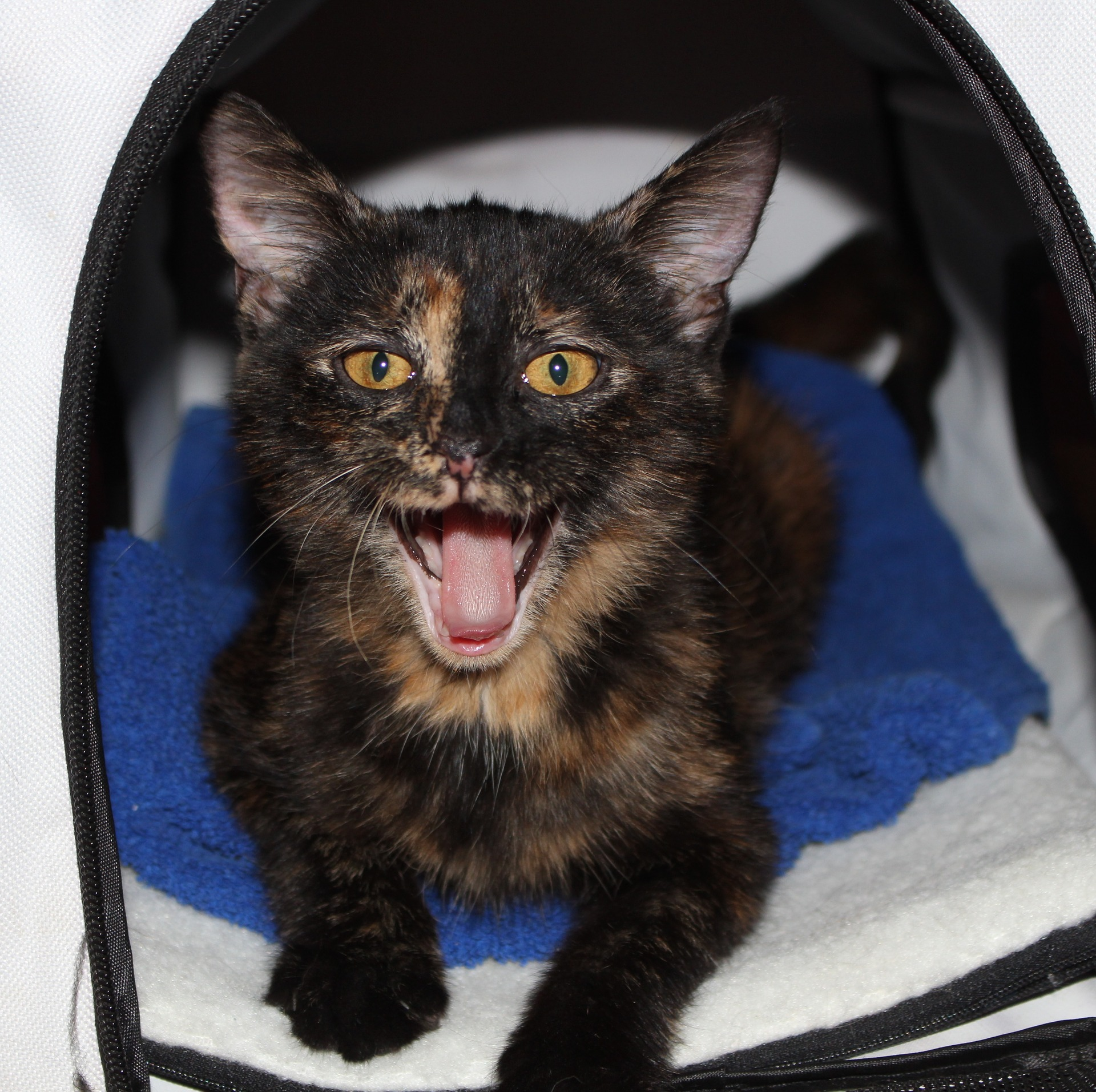Cat Panting – Is it Normal for Cats to Pant?