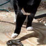 Adventurecat First Aid Guide: How to Treat a Cat Snake Bite