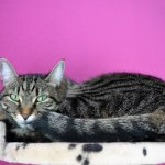 Cannabis for Cats With Cancer – Can Cannabis Help?