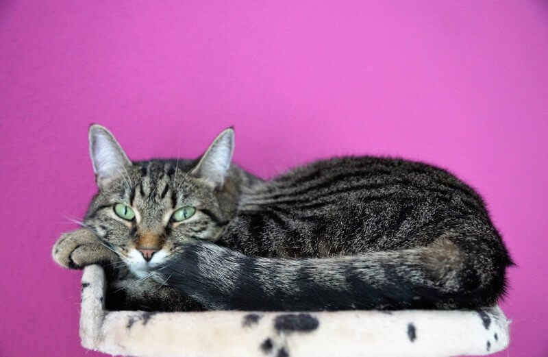 cannabis for cats with cancer