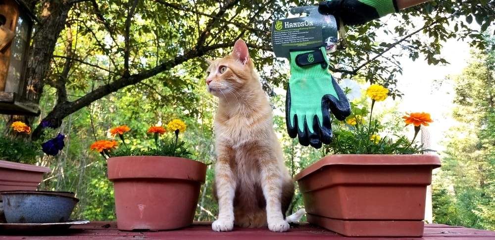 HandsOn Gloves for Cats Review: We Tried Grooming Gloves for Cats