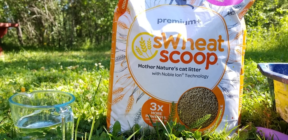 sWheat Scoop Cat Litter Review