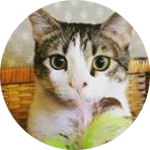mrbiteycat profile