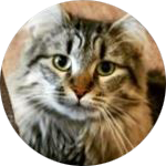 yeti_mallow profile