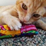 Best Cat Kicker Toy: Kitty Kick Stix Review