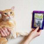 InClover Smile Cat Dental Treats Review: We Tried Functional Cat Treats