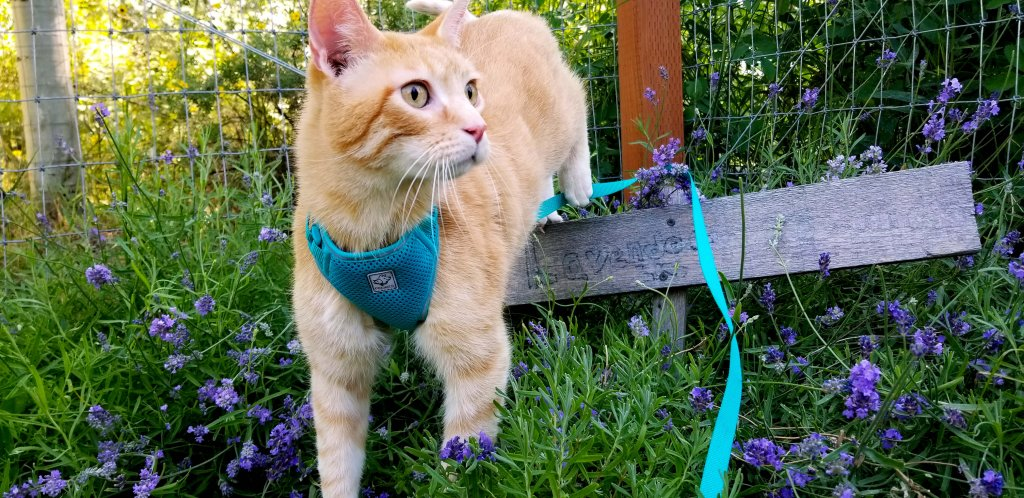 nature scents cat litter