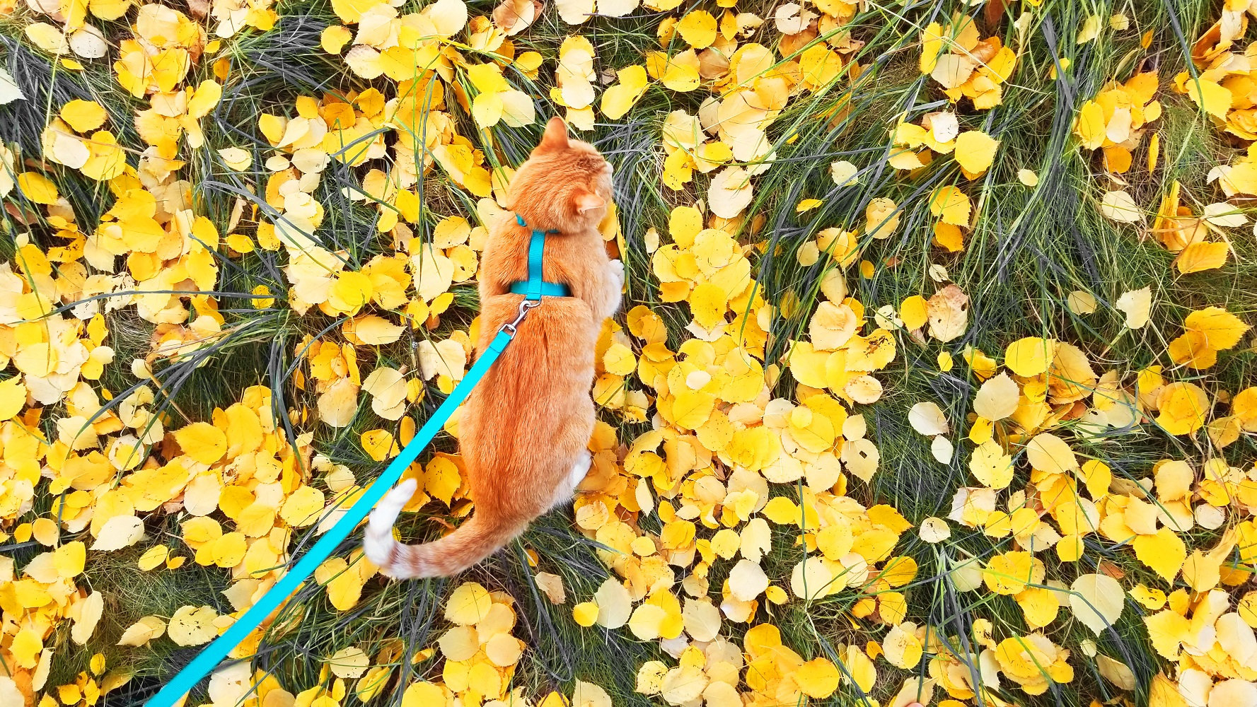 10 Fun Fall Activities You Can Do With Your Cat