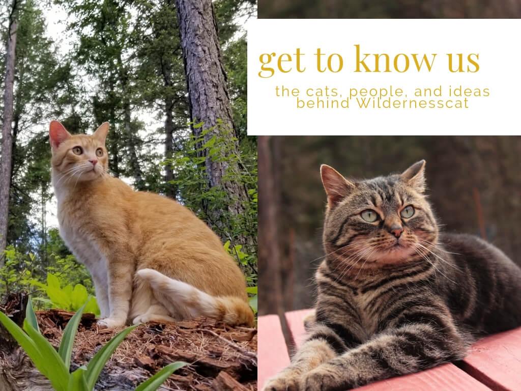 about wildernesscat