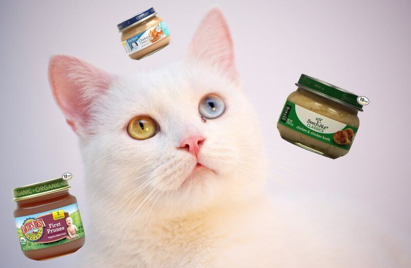 Can Cats Eat Baby Food Featured