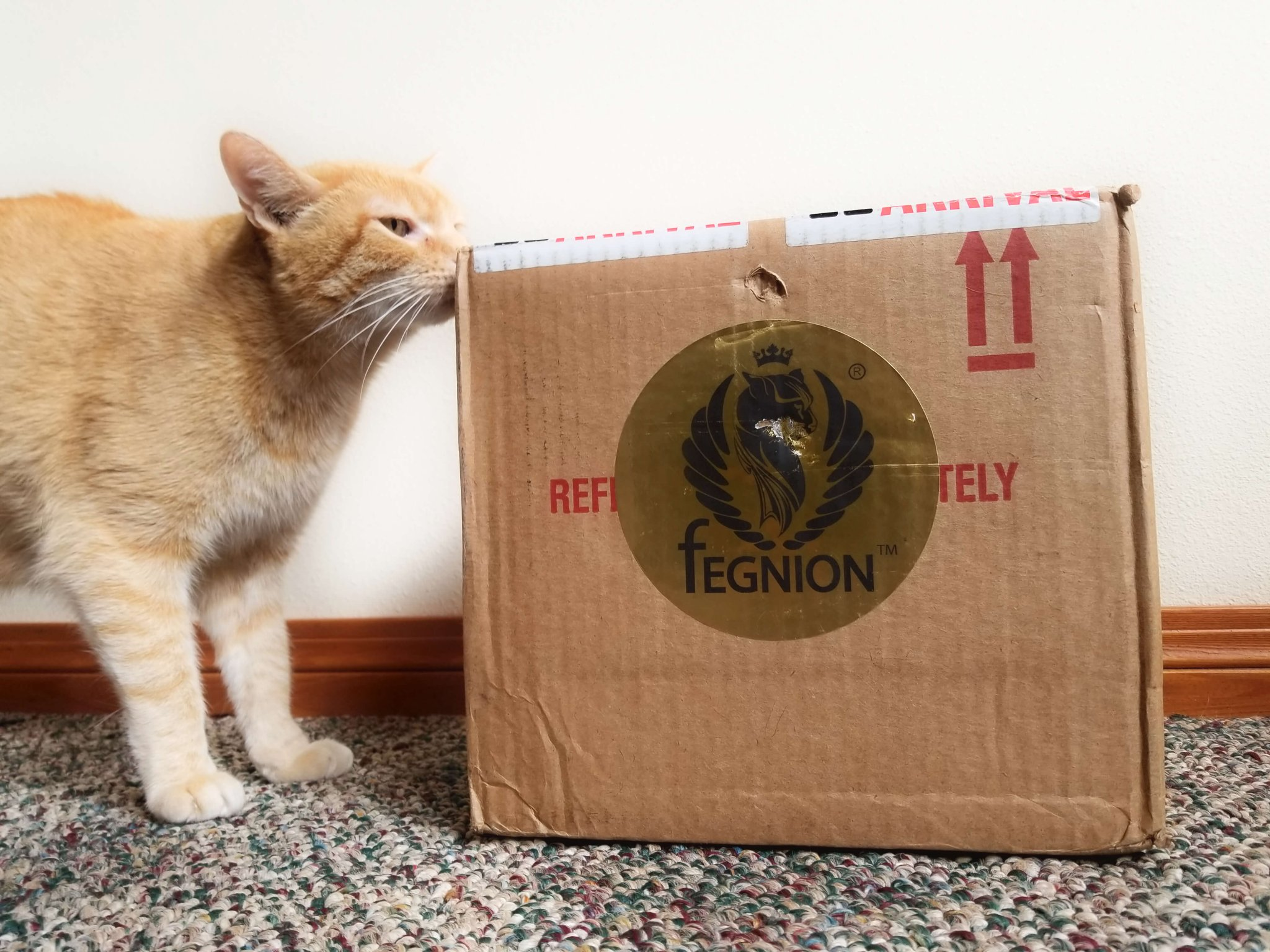 Wessie Encounters the Fegnion Box