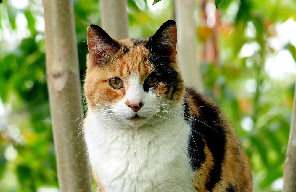 calico cat on mayflower