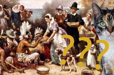 cats at first thanksgiving feast