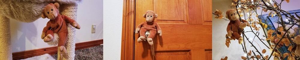 happy bongo monkeys around the house