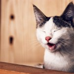 The Truth About Raw Cat Food and Constipation