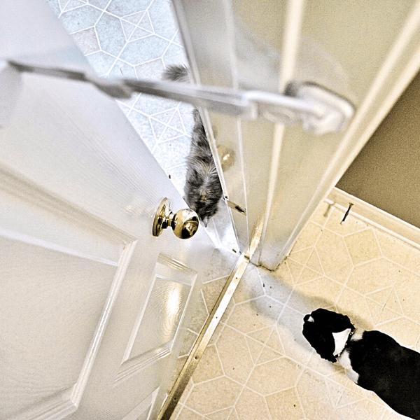 Dog locked out of room by Door Buddy door latch