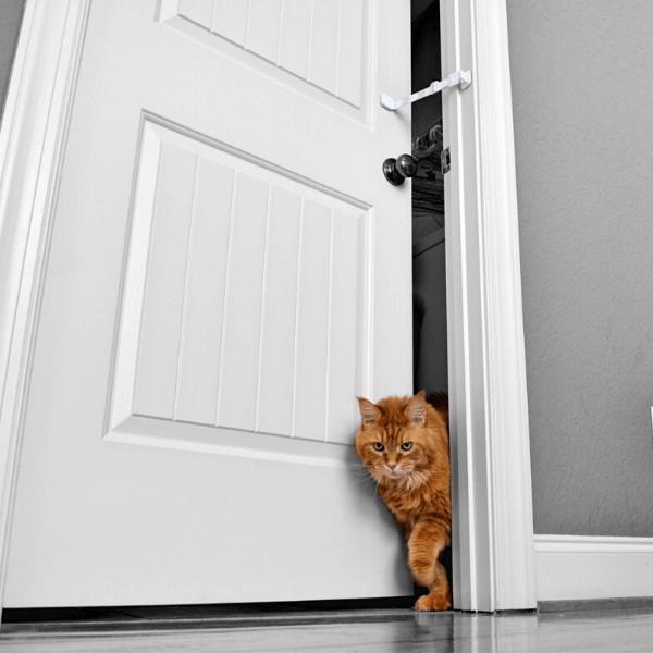 Cat walking through door