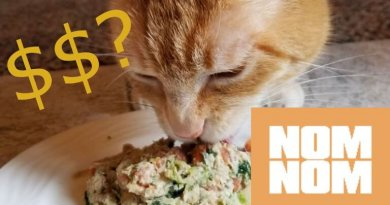 How much does Nom Nom cat food cost