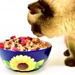Are Cats Omnivores?