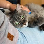 Boarding a Diabetic Cat: What to do With Your Diabetic Cat When You're Away