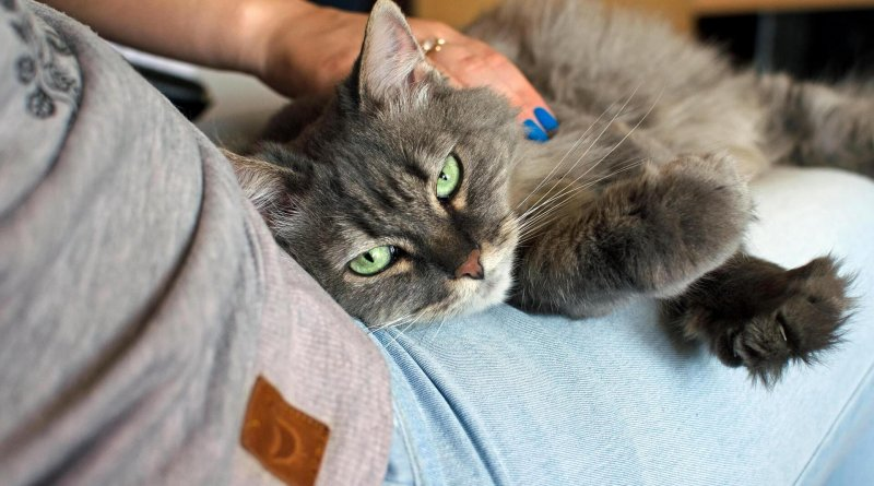 Cat sitters for diabetic cats