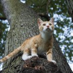 How to Keep Your Outdoor Cats Safe and Healthy