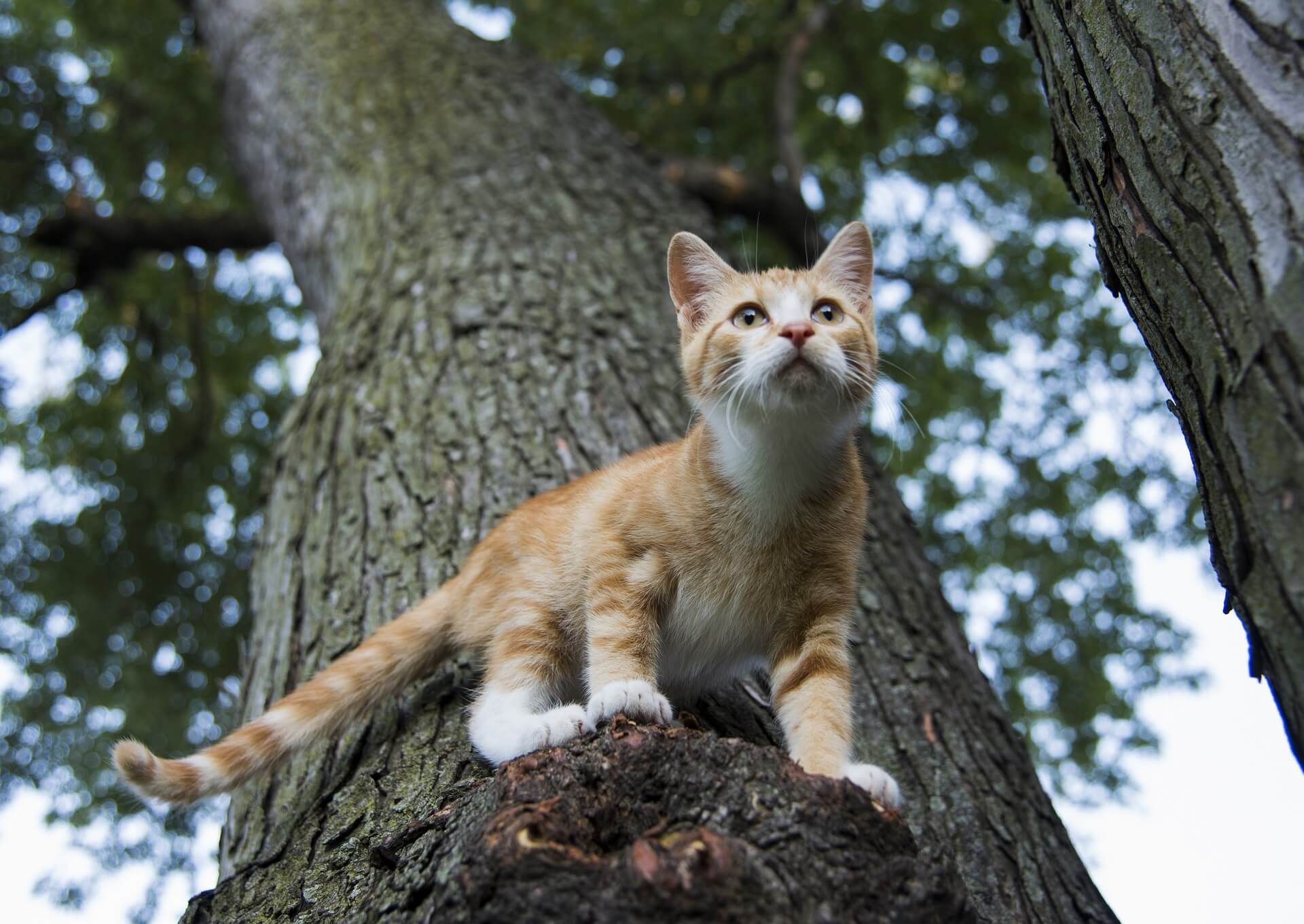 How To Keep Your Outdoor Cats Safe And Healthy Wildernesscat