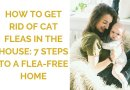 How to Get Rid of Cat Fleas in the House: A 7-Step Guide
