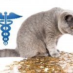 What to Do if You Can't Afford a Vet