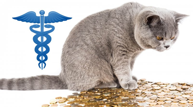 Can't Afford a Vet - Cat Looking at a Pile of Coins