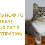 Cat Constipation Treatment: Remedies, Food, and When to See the Vet