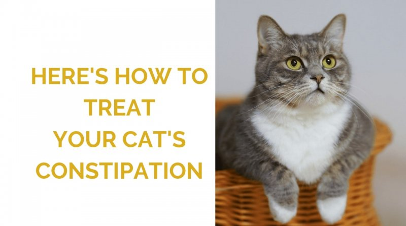 Cat Constipation Treatment Feature