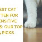 Best Cat Litter for Sensitive Paws