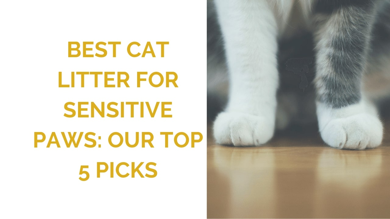 Best Cat Litter For Sensitive Paws Wildernesscat