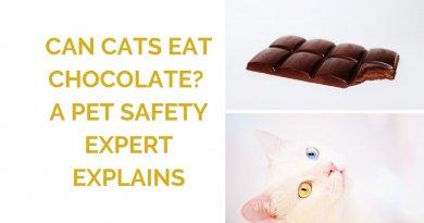 Can Cats Eat Chocolate? An Expert Explains
