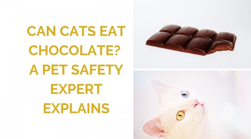 Can Cats Eat Chocolate? An Expert Explains