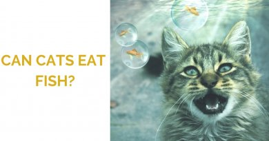 Can Cats Eat Fish?