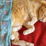 Socksery Custom Cat Face Socks Review: We Got Wessie-face Socks!