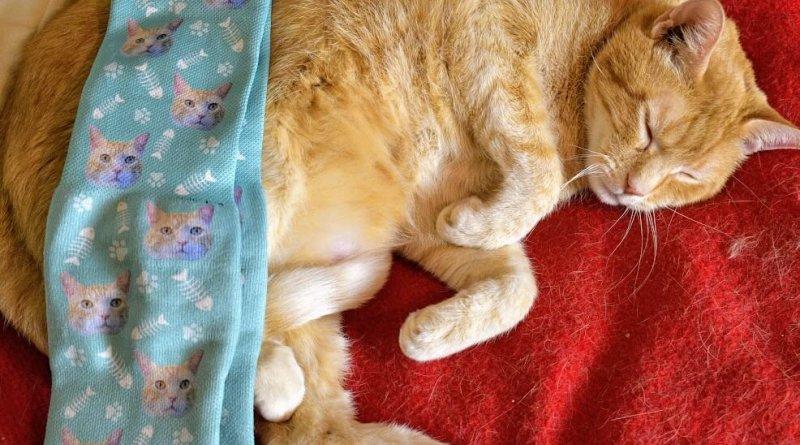 Wessie with custom cat socks